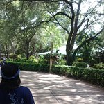 Cool & Lush Shade at Busch Gardens