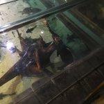Blue Reef Aquarium Foto