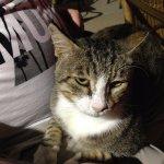 Thomas the hotel cat
