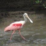 Animals on Jungle River tour.