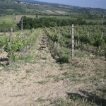 Photo of Wine Tour in Tuscany