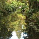 Mount Usher Gardens Foto