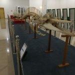 Foto de National Museum