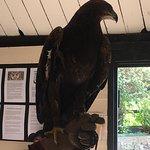 Yarak Bird of Prey의 사진