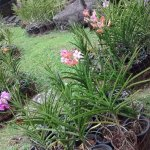 Photo of Orchid Park (Taman Orkid)
