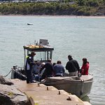 Photo of SeaMor Dolphin Watching Boat Trips