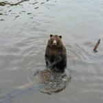 Foto de Fortress of the Bear
