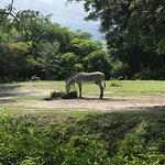 Photo of Zoo Miami