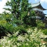 Takashima Castle-billede