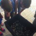 Crab Races! Who to choose?!