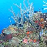 Photo of Seagrape Plantation Resort