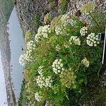 Photo of Happo Pond
