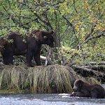 Munsey's Bear Camp Foto