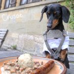 Crusoe with his sausage, designing his plan of attack! (No, he didn't actually eat it)