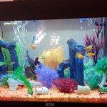 Fish tank breakfast area