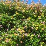 Le jardin du LENA MARY