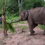 Foto de Elephant Village Sanctuary & Resort