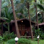 A/C Log Cabins nestled in a coconut tree grove, hidden from the hustle and bustle of the city