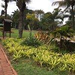 Durban Botanic Gardens Plants