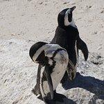 Photo of Boulders Penguin Colony