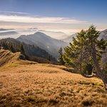 Herbstzeit Bodensee im Nebel