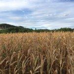 Photo of Agriturismo I Due Mondi
