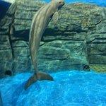 Photo of Ji Di Guan - Pole Aquarium.