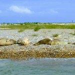 Seals on the shoreline