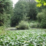 The lake where we glimpsed a kingfisher