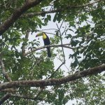 Toucan spotted!
