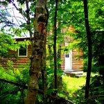Zdjęcie Wild Fox Cabins