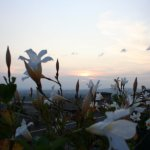 View across flower box on roof patio, watching the sunset over Umbria.