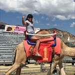 Camel Races in nearby Virginia City! What a hoot!!