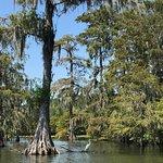 Photo de Champagne's Cajun Swamp Tours