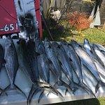 جولات الصيد وتأجير السفن