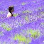 Foto de Lavender By The Bay