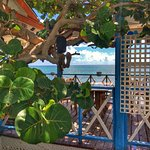 Tukka Deck Daytime Caymans