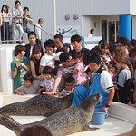 Photo de Echizen Matsushima Aquarium