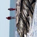 The Seawall Foto