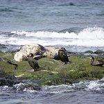 Sun bathing porpoise.