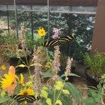 Foto di The Arboretum at Flagstaff