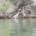 Foto de Havasu National Wildlife Refuge
