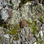 Little frog, lots of wildlife around