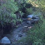 Our Santa Rosa Creek in backyard!