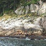 Photo of Kenai Fjords Tours