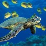 Turtles while snorkeling