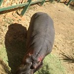 Johannesburg Zoo Foto