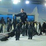 Photo of Kelly Tarlton's Sea Life Aquarium