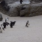 African Penguins have the beach to themselves - coffeecameraandtheroad