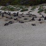 Penguins resting at the beach - coffeecameraandtheroad